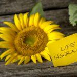 【第54回】生命保険、一定枠まで非課税